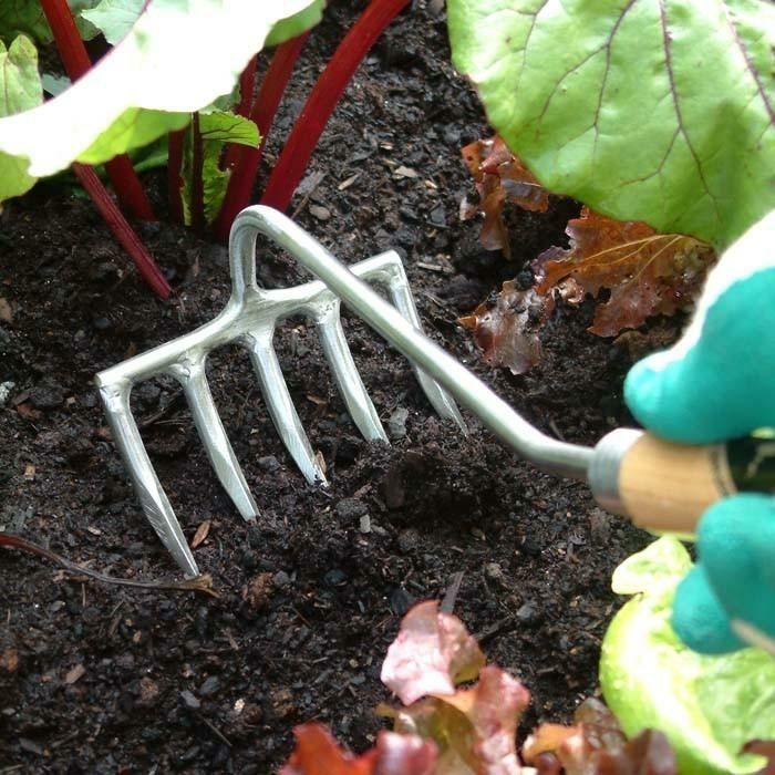 Garten Im September garten im september die erde sollte gelockert werden garden
