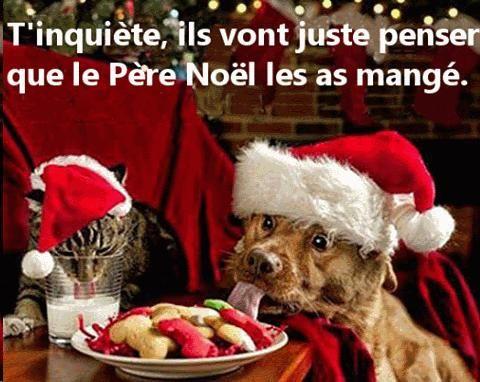 Le Noël des animaux | Photos de noël drôles, Chien noel et Animaux amusants