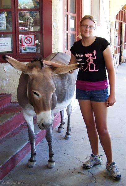 Oatman, AZ town burros wander the streets
