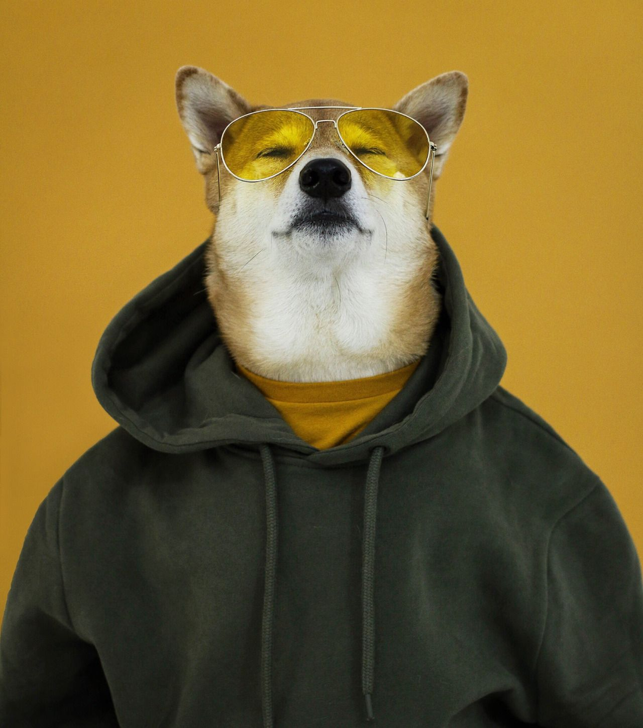 Shiba Inu And German Shepherd Mix Dog With Glasses Animals Cute Dog Pictures Dogs