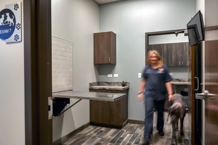 Hinsdale Animal Hospital Kremer Veterinary Services