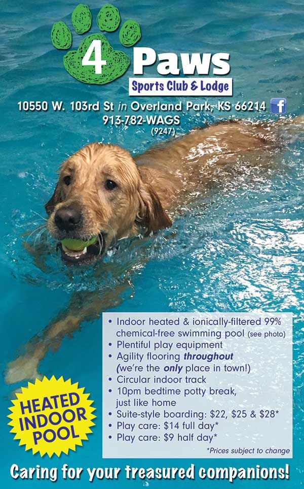 Pin By Ifamilykc Kansas City Kids Gui On Pets In The Home Ipetskc Indoor Dog Park Dog Park City Pets