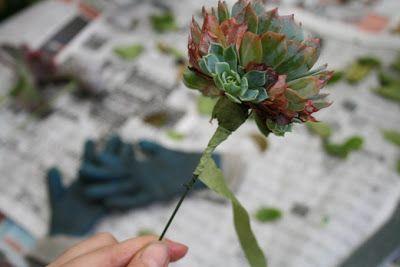 Poppytalk: Inspiration: Succulents Bouquet How-To