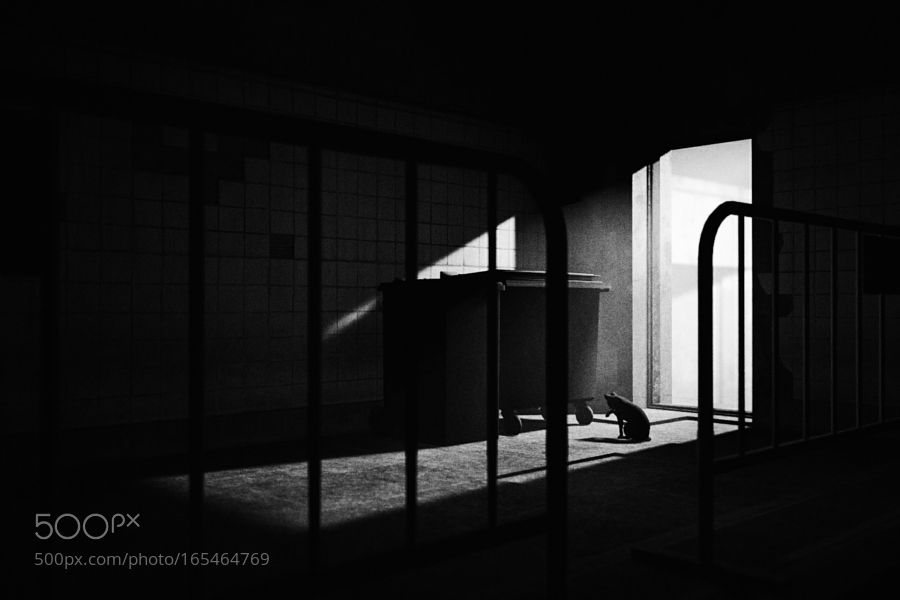 Untitled by lostsaturation
