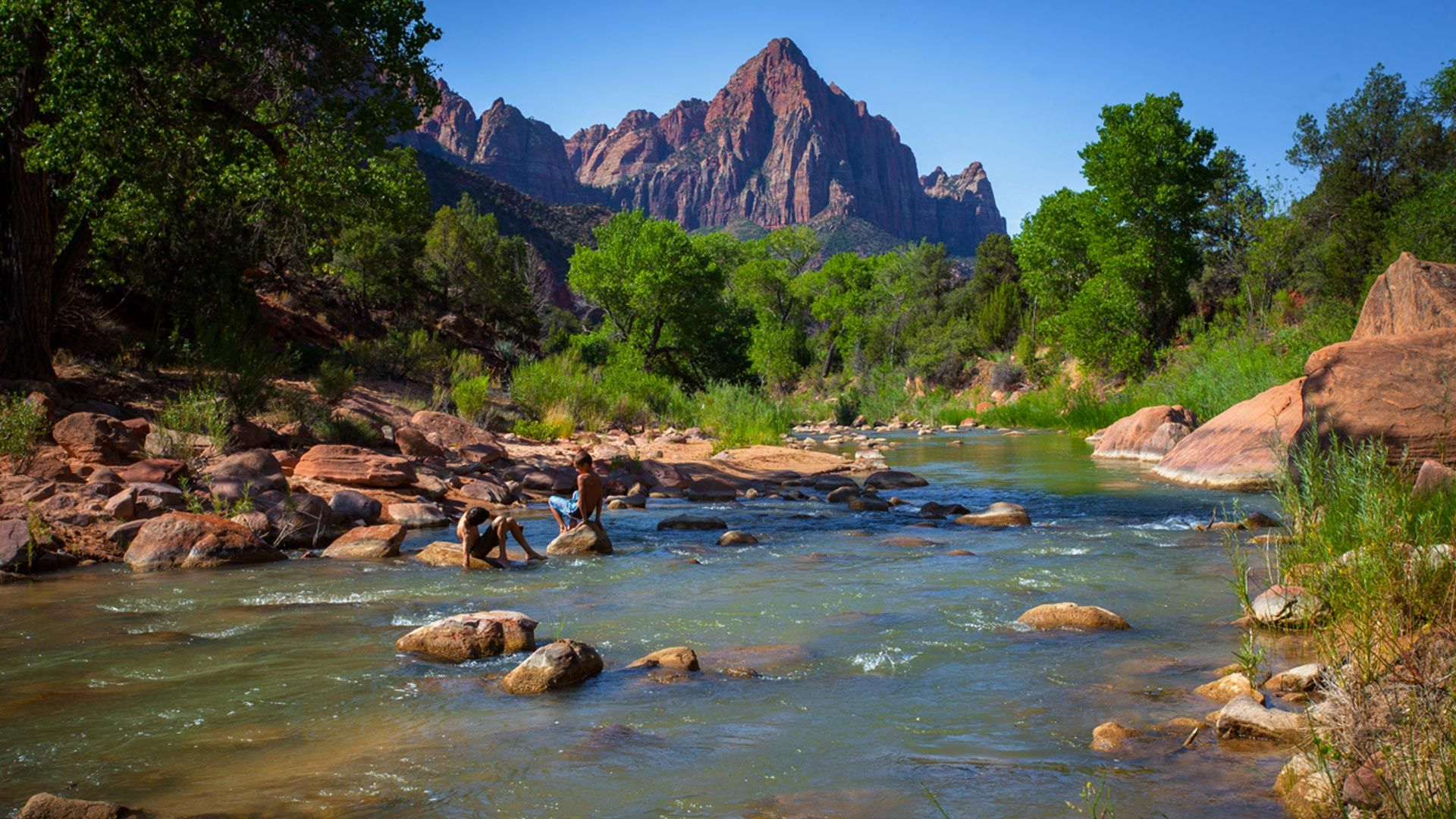 The Diversified Flora And Fauna Of Zion National Park Includes 289 Species Of Zion National Park Lodging Zion National Park Hotels Mt Zion National Park
