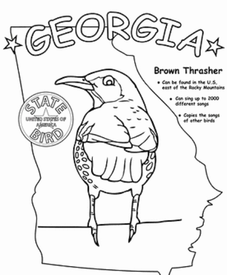 Georgia State Bird Coloring Page With Images Bird Coloring
