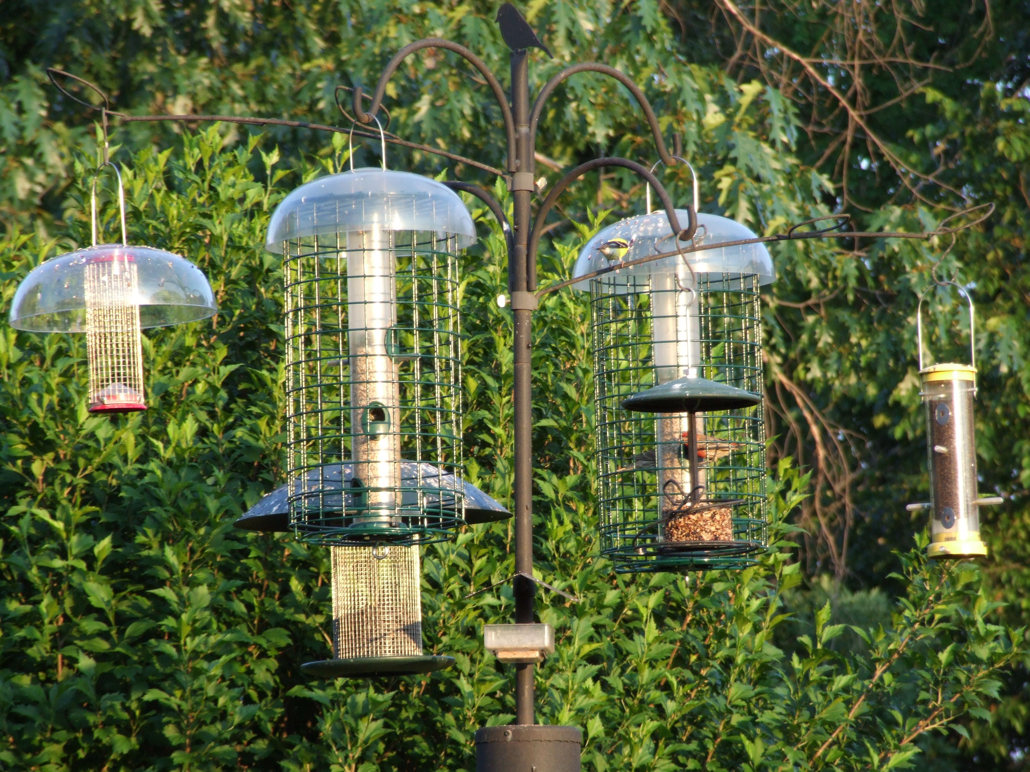 birds lowe bedroom yellow birdhouse plan unique unlimited houses h goldfinch feeder feeders for finch plans bird house