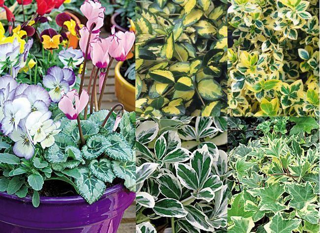 Pot e d 39 automne des fleurs et feuilles panach es - Plantes fleuries d automne ...
