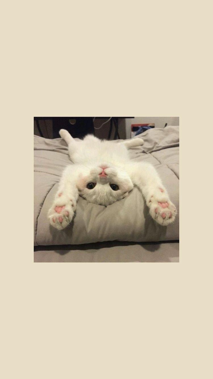 Pretty Wallpapers Pretty Wallpapers 2020 Sevimli Kedi Yavrulari Cute Kittens Sevimli Kediler