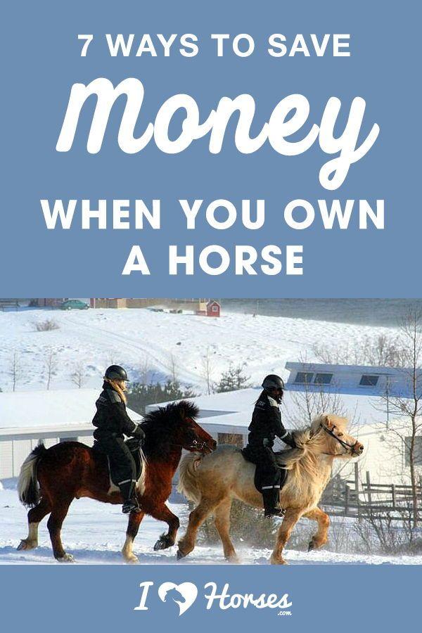 7 Möglichkeiten, Geld zu sparen, wenn Sie ein Pferd besitzen   – Helpful Tips for Horseback Riders | Tips for Equestrians