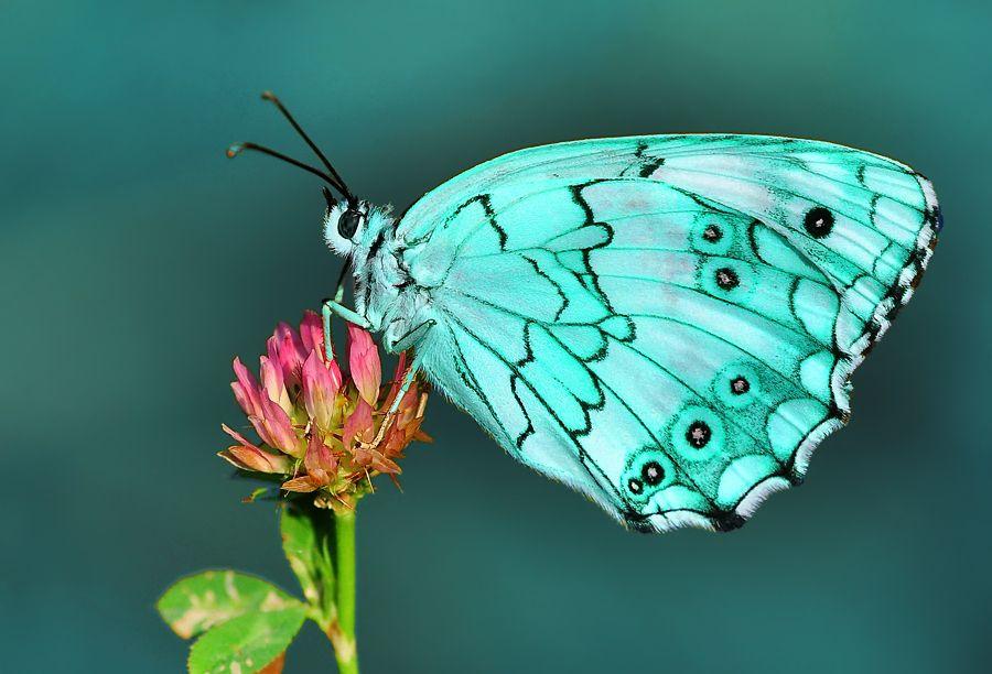 Butterfly by Mustafa Öztürk, via 500px