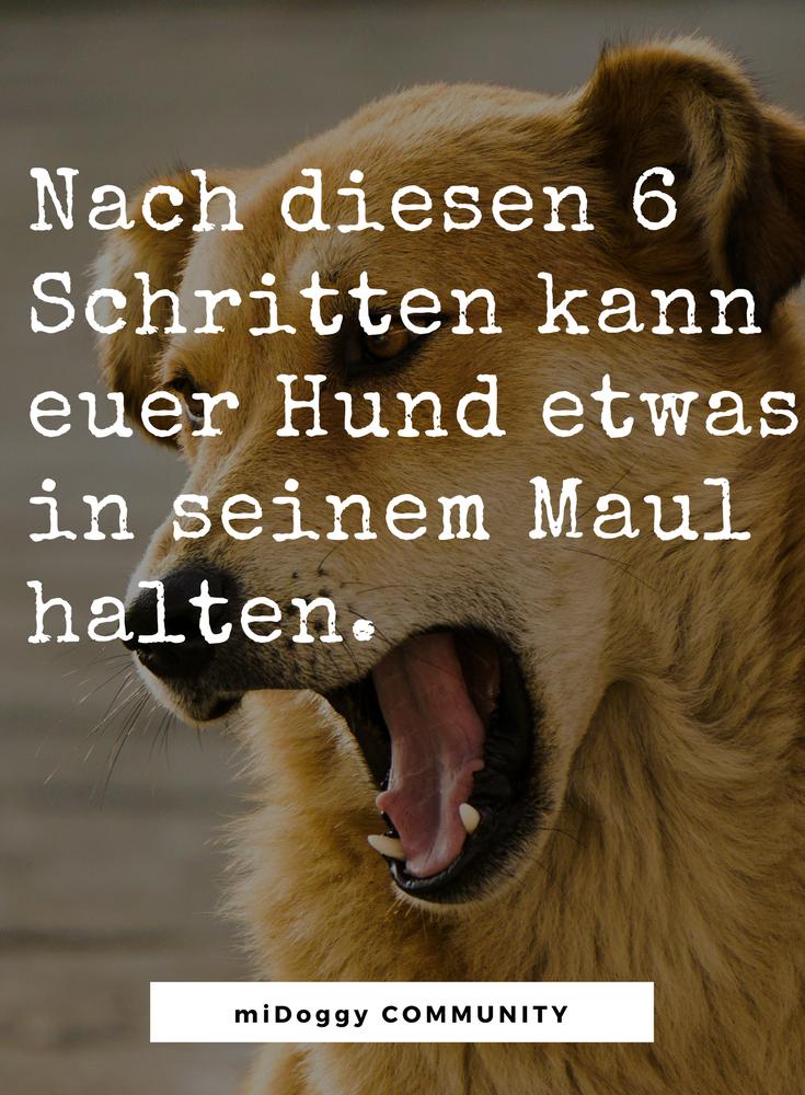Halt Doch Mal Eben Das Hier Fest Kommando Halten Hunde Hunde Tricks Beibringen Hundetricks
