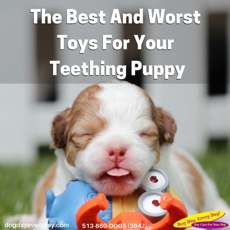 The Best And Worst Toys For A Teething Puppy Dog Breeds Dog