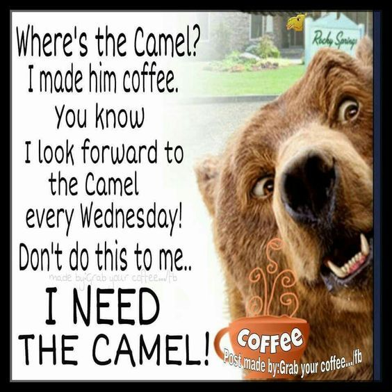 Pin By Barbara Merryweather On Coffee Hump Day Humor Wednesday Morning Quotes Wednesday Humor