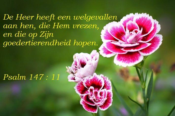 Citaten Met Geloof : Vertrouw op de heer bijbelteksten nederlands pinterest