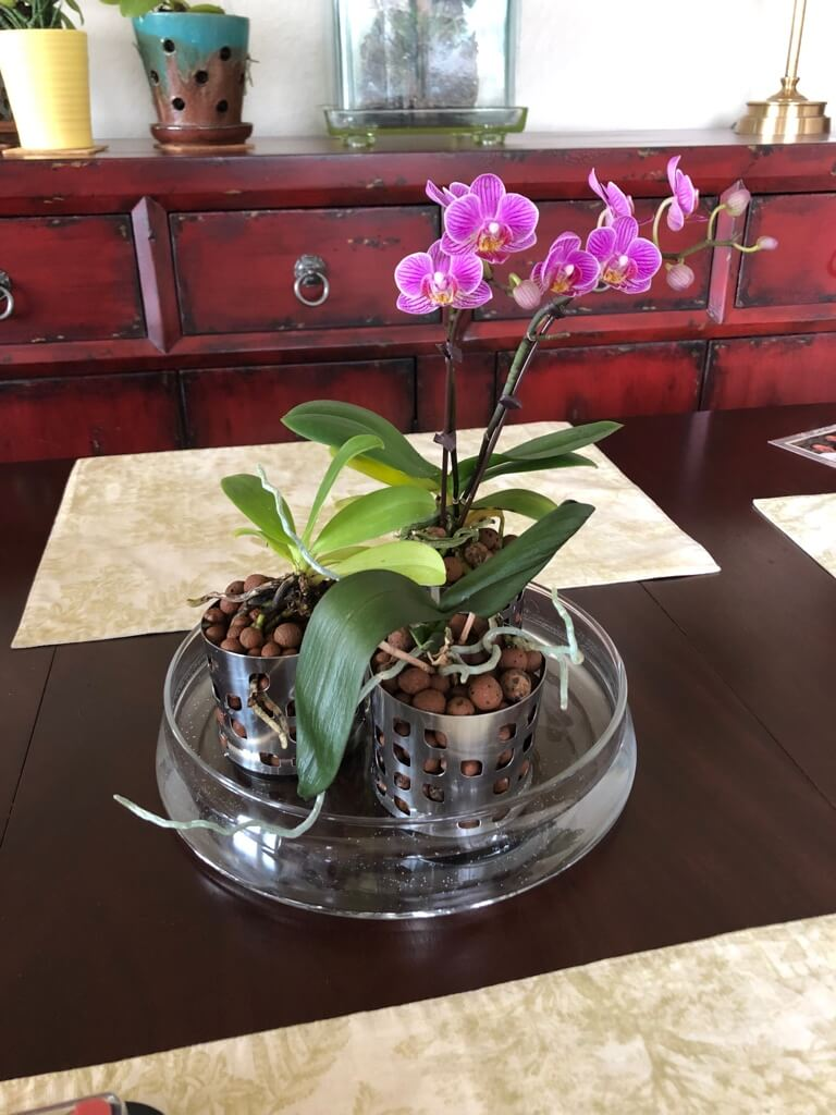 Watch Them Bloom In Semi Hydroponic Orchid Pot Hack Ikea Hackers Orchid Pot Orchids In Water Orchid Planters