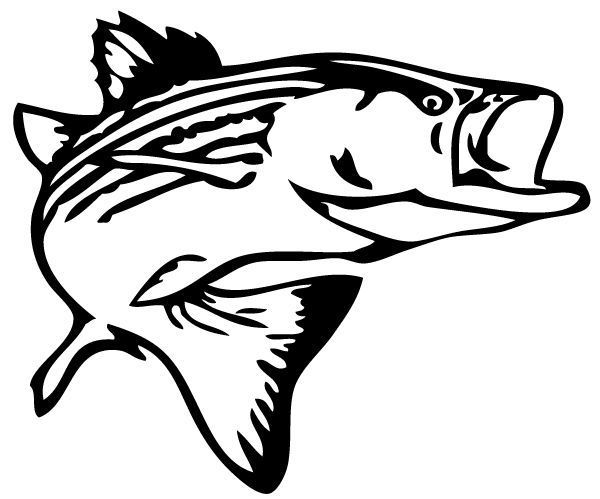 Bass Fish Vinyl Decal 9 Inch Decal Sticker Car Trucks Kayaks