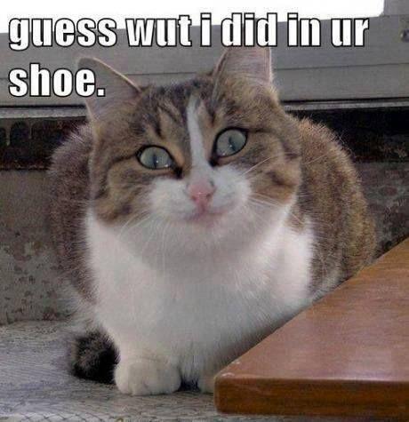 Really LOL Cats (7:11:49 PM PST  Thursday, February 19, 2015) – 10 pics