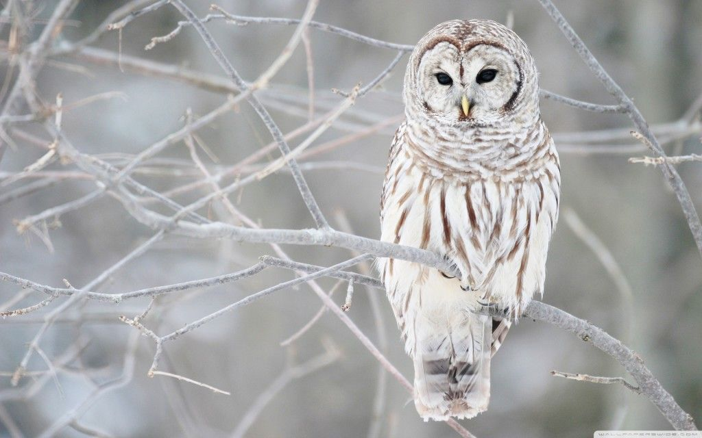 White owl would be cute for a tattoo.