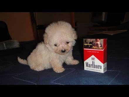 perros tacita de te - Buscar con Google | perritos | Pinterest ...