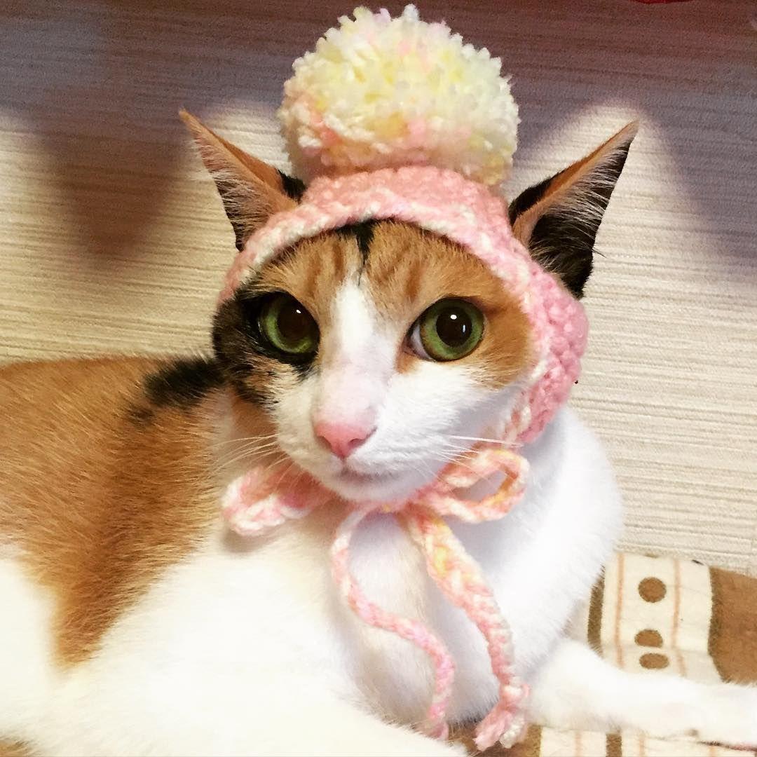 モデルかっ‼️✨✨✨ ぐりぐらとサイズ感違い過ぎる😂 . . #猫 #CAT #cats #三毛猫 #はぁたん #保護猫