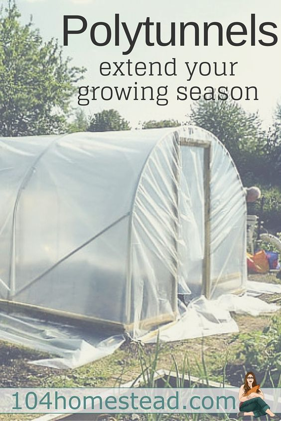 Extend Your Growing Season   Cold frame, Plants and Gardens
