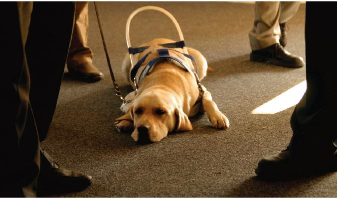 Service Animals and Emotional Support Animals | ADA National Network