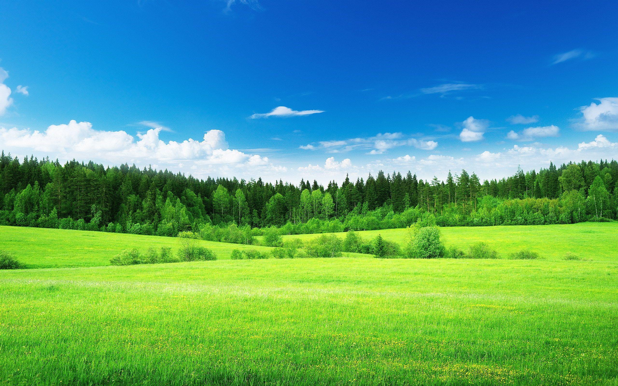 Earth And World 2020 Popular Magazine Grass Wallpaper Green Nature Wallpaper Landscape Wallpaper