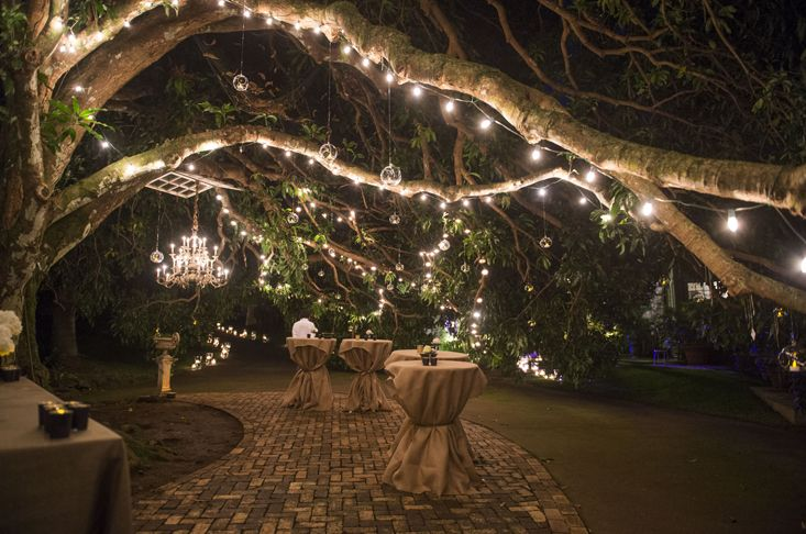Lights #bigtrees / Luci #grandialberi