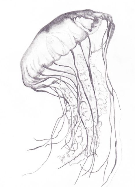 Imgs For > Jellyfish Realistic Drawing | tattoo ideas ...  Imgs For > J...