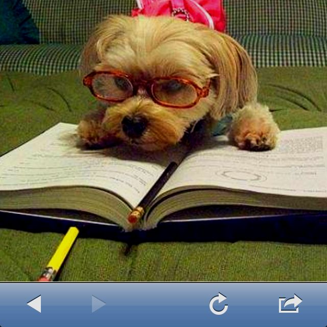 Nerd do my homework