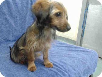 Pin On Animals In Urgent Need