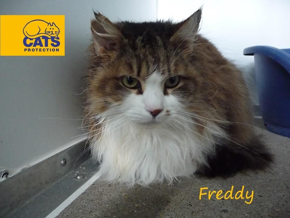 Freddy Cats Protection Animals