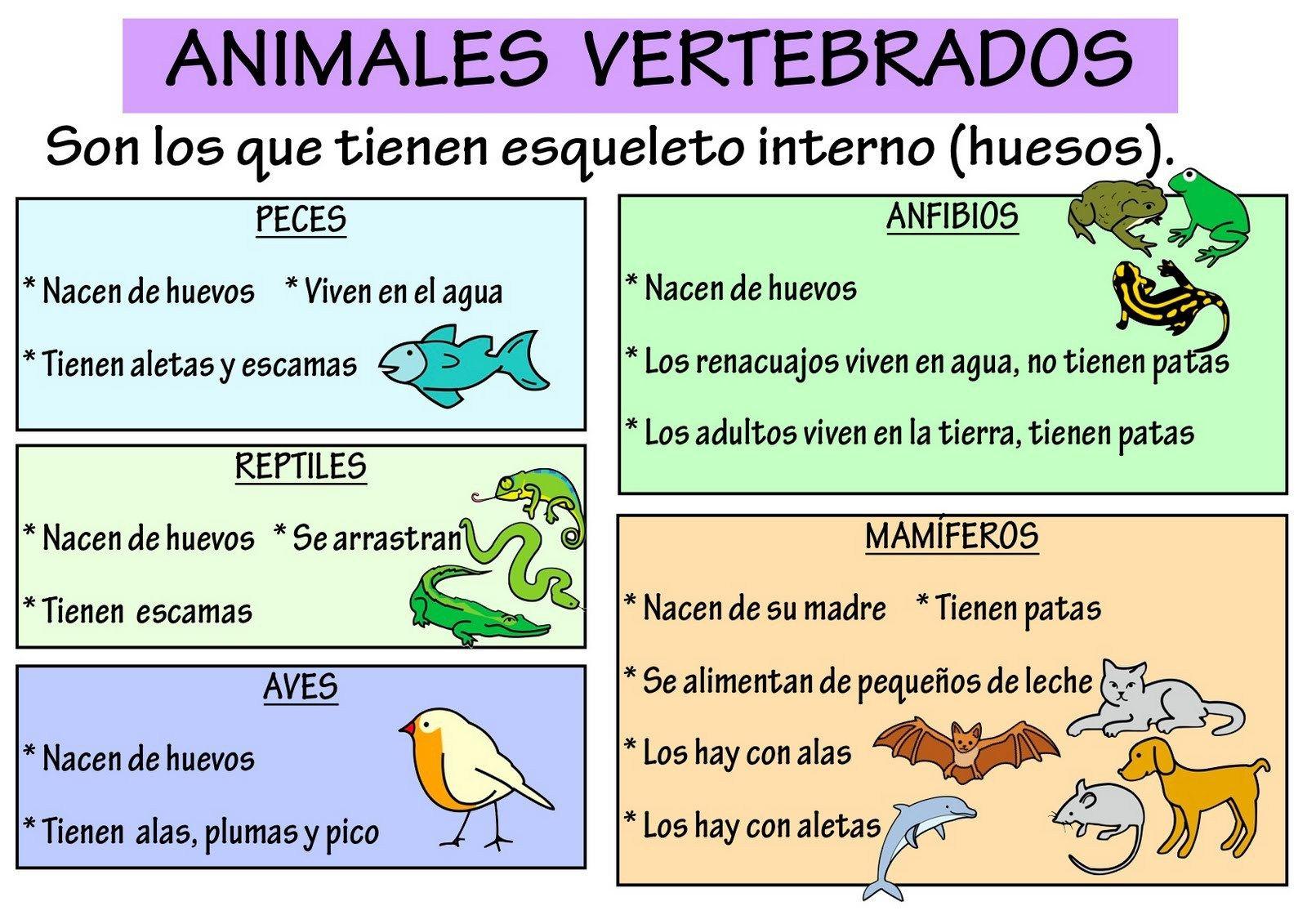 Resultado de imagen de animales tipos esquema 2º primaria