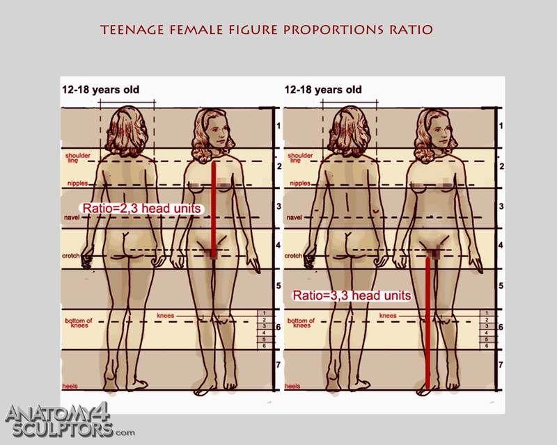 Character Design Proportions : Teenager figure proportions ★ character design