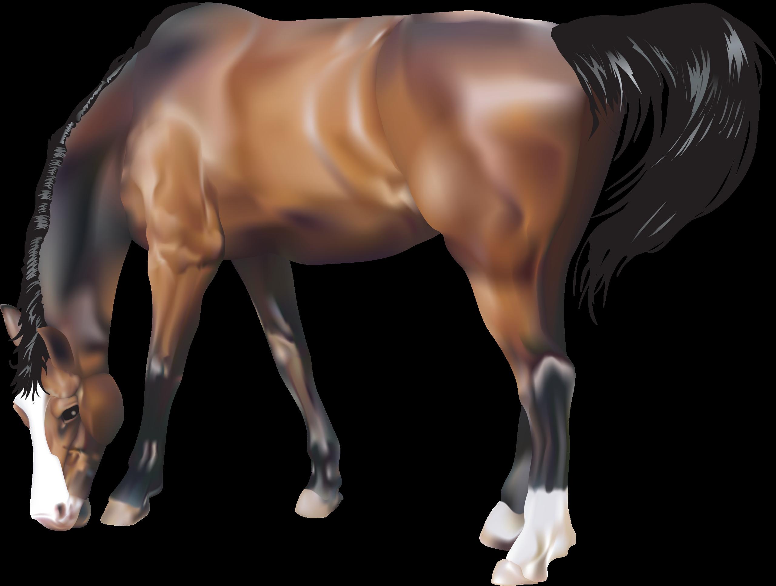 условием лошадь рисунок без фона которую можно использовать