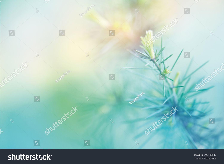 Blurred flower background projects sjh pinterest flower