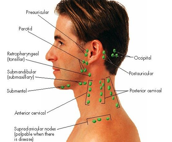Lymph Node Location of Head and neck   Physician assistant ...