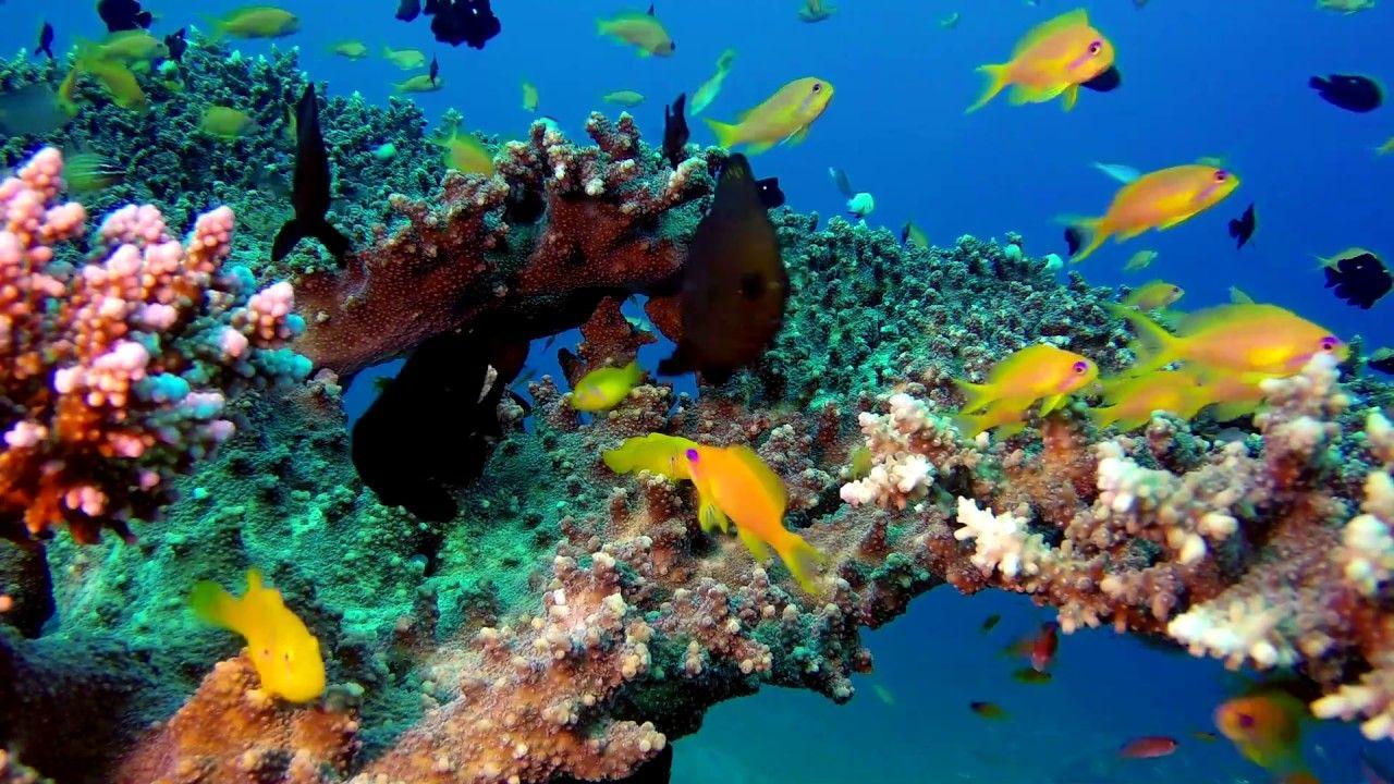 3 HOURS of Beautiful Coral Reef Fish Relaxing Ocean Fish ...