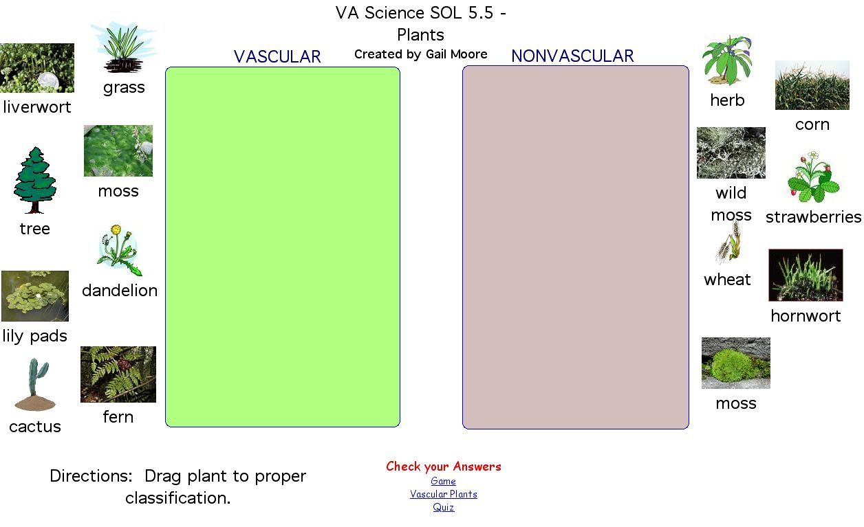 Vascular And Nonvascular Plants Worksheet Free Worksheets Library – Plant Classification Worksheet