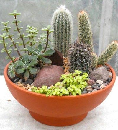 C mo montar un mini jard n de suculentas cacti terraria - Como arreglar un jardin ...