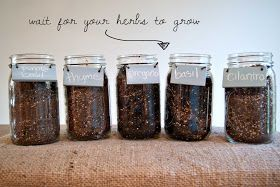 Dimples and Pig Tales: DIY Mason Jar Herb Garden