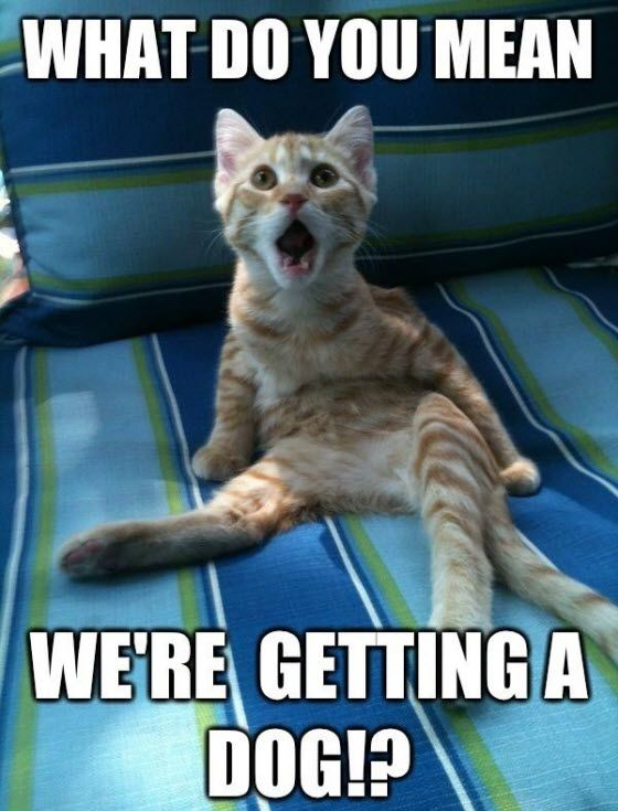 Cat Got Your Tongue 4th October 2014 Funny Animals Funny Cat Memes Funny Animal Quotes