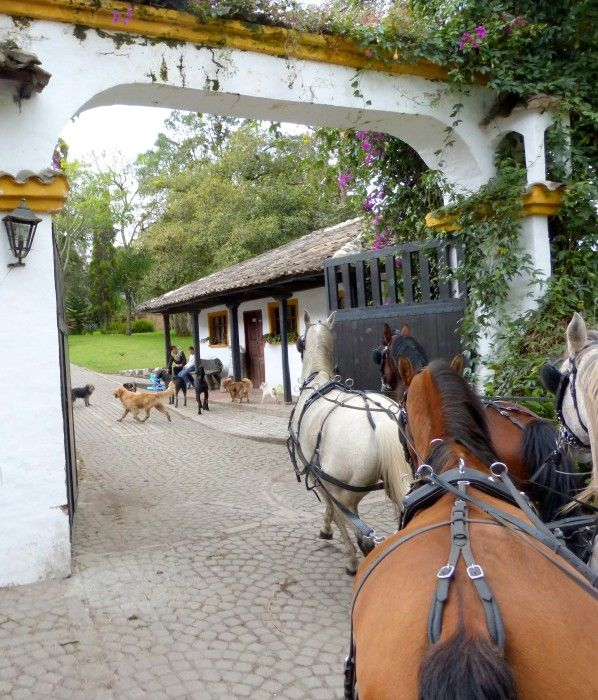 RW Crew Member, Julie, goes for a marathon carriage ride in Ecuador at an uncle's beautiful farm. Click for the blog.