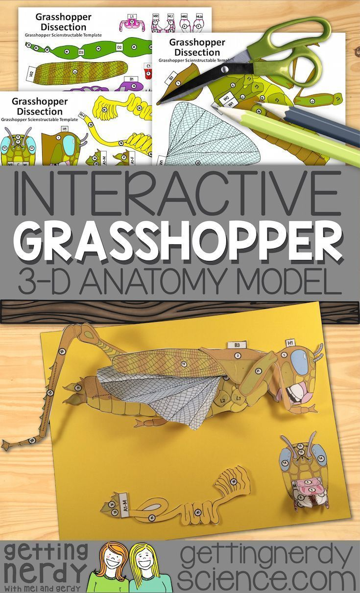 This 3 D Grasshopper Dissection Model Can Be Used As A Dissection Free Grasshopper Exploration A Pre Life Science Activities Life Science Life Science Lessons [ 1211 x 735 Pixel ]