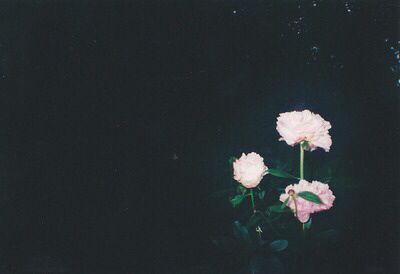 Pinterest - AngieOhCreer