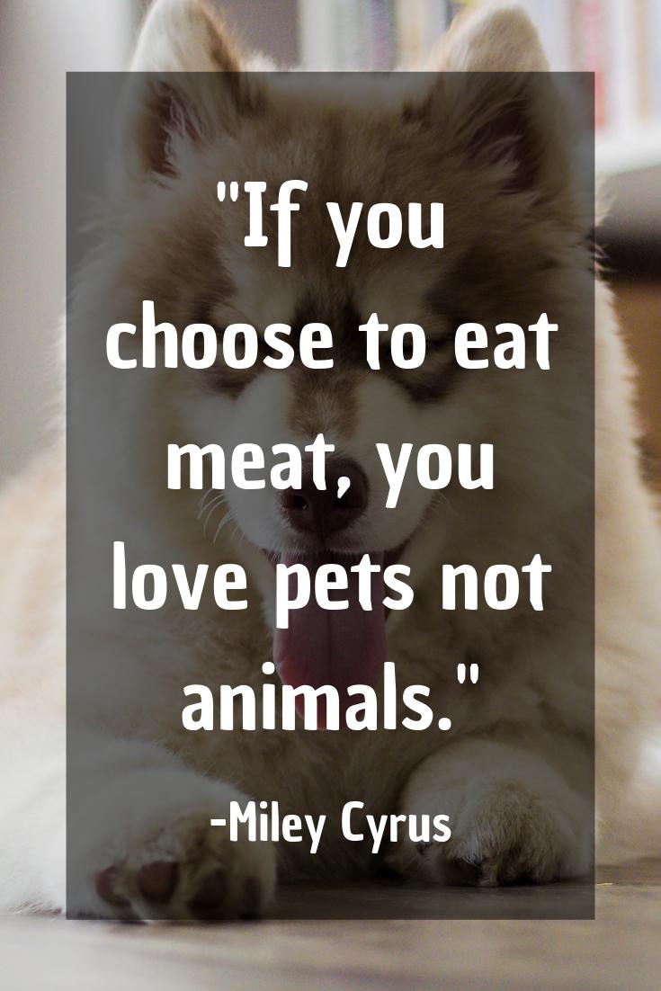 71 Amazing Vegan Quotes You Ll Wish You Said Vegan Quotes Funny Vegan Quotes Vegan Lifestyle