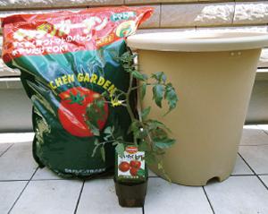トマトの育て方(ベルモンテ)