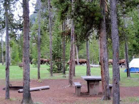 yellowstone madison campground map Yellowstone Madison Campground This Is The Only Campground I yellowstone madison campground map