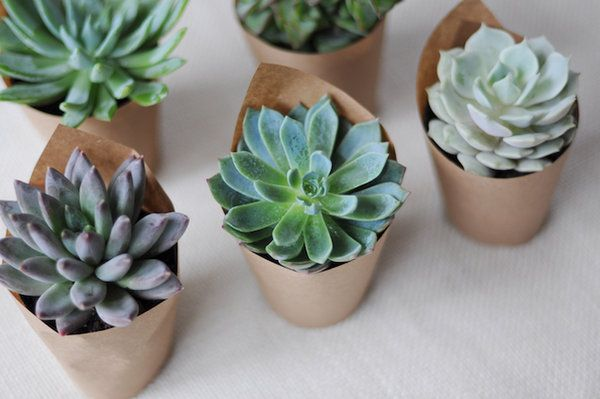 Photo By: Mary Swenson  Succulents are all the rage for weddings and parties, and with good reason: these little plants are not only completely adorable, but they're inexpensive and easy to work into just about any theme.        The popularity of succulents has made them available almost anywhere. We purchased ours for less than $3 each at a home improvement store!        There are many different types of succulents to choose from, and...